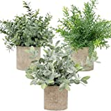 """Artificial Potted Plants - Mini Fake Plants – Set of 3 Small Indoor Faux Houseplants for Shelf Tabletop Desk Decoration - Eucalyptus - Rosemary - Boxwood - Greenery in Pots - 9"""" Tall Plant in Pot"""