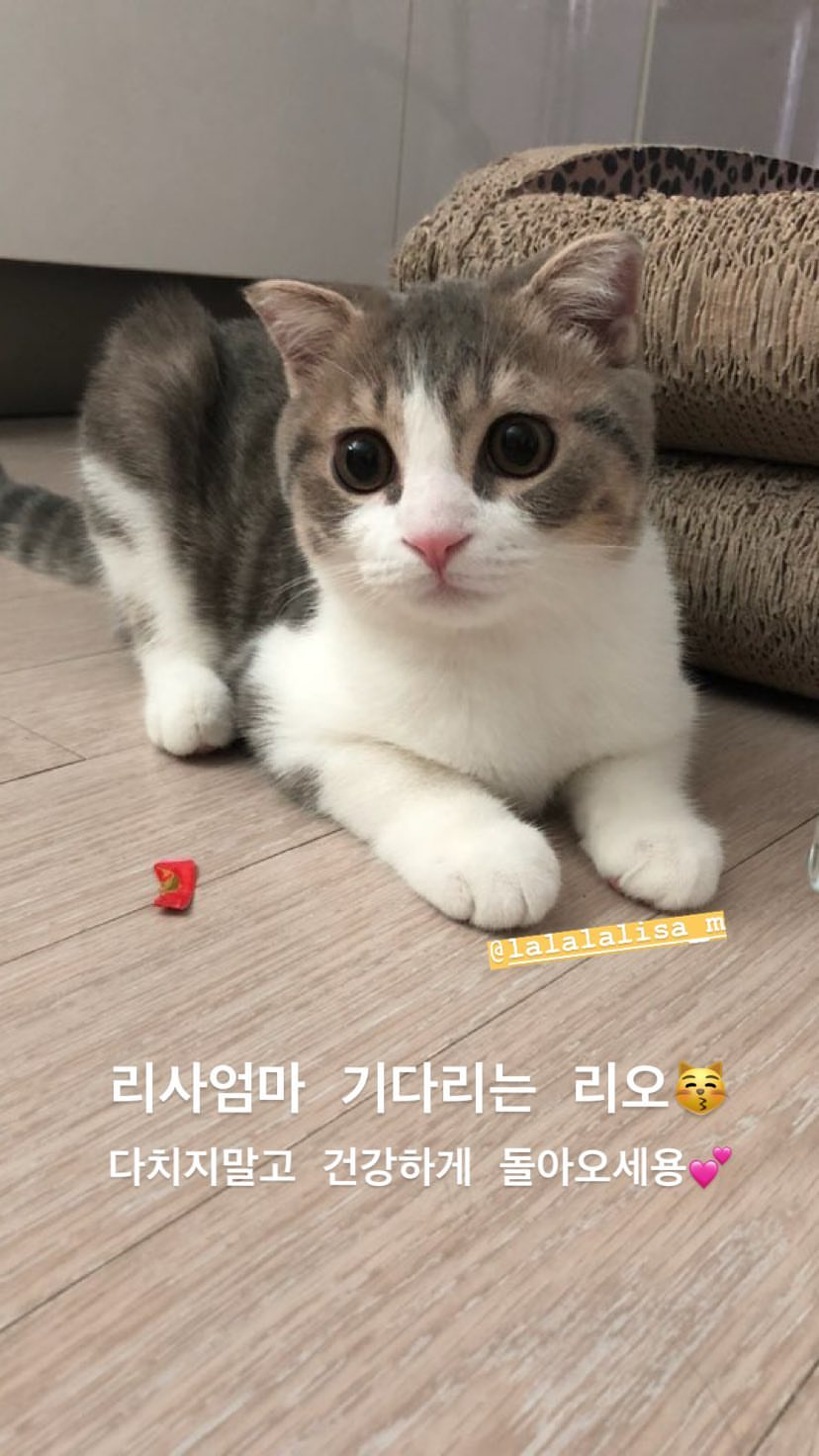 BLACKPINK Jisoo Instagram Story 30 July 2018 Leo Lisa